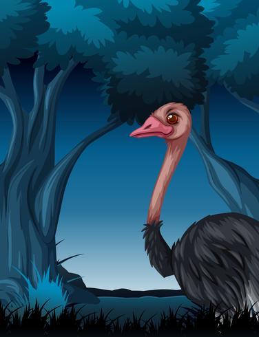 An ostrich in dark forest