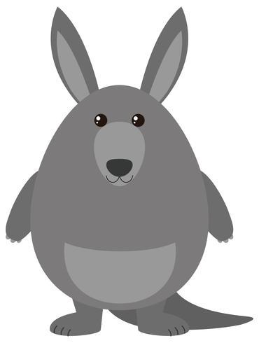 Grå känguru med gott ansikte