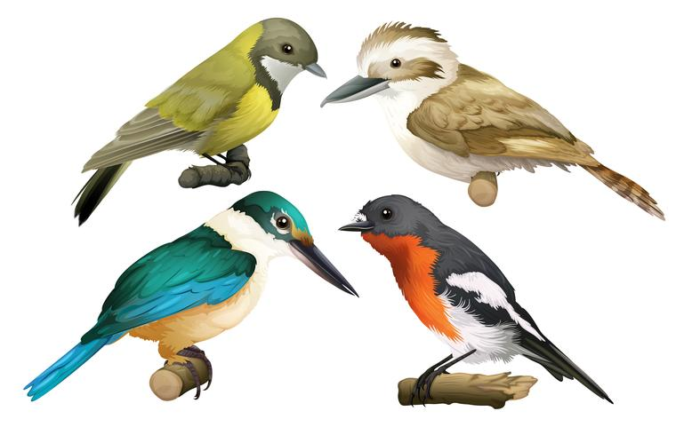 Een set van vogels op witte achtergrond