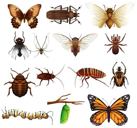 Diversi tipi di insetti selvatici vettore