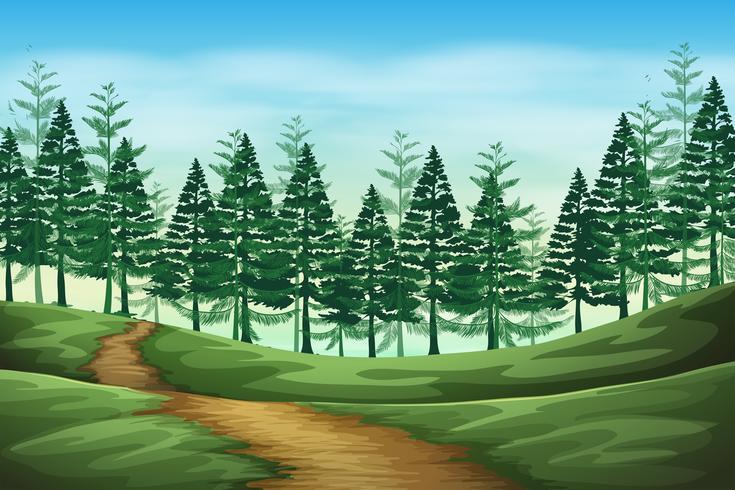 Cena de fundo de paisagem de floresta