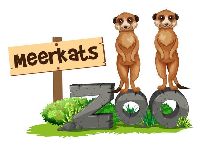 Dos suricatas junto al cartel del zoológico.