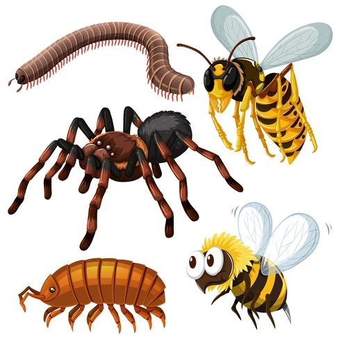 Different kind of dangerous insects vector
