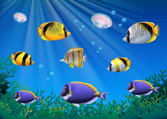 Scène met kleurrijke vissen onderwater zwemmen