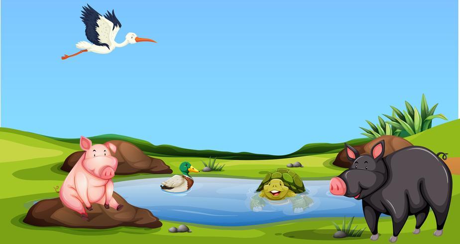Animale allo stagno