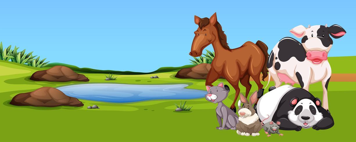 Veel dieren bij de vijver