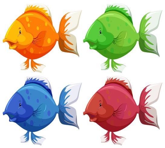 Pesce carino