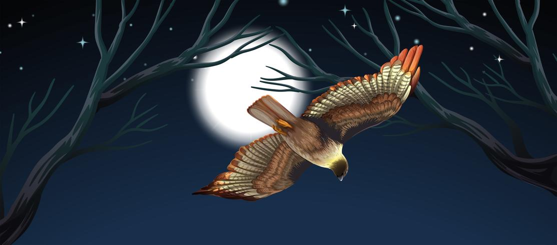 Pássaro voando cena noturna