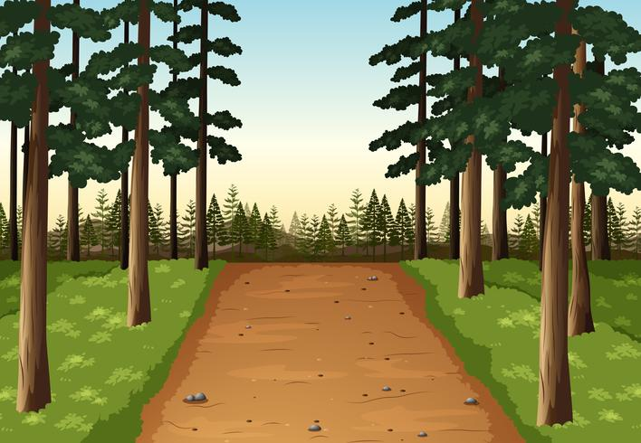 Background scene with pine forest