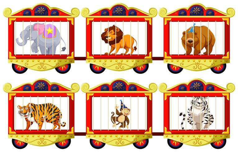 Animales salvajes en las jaulas de circo.