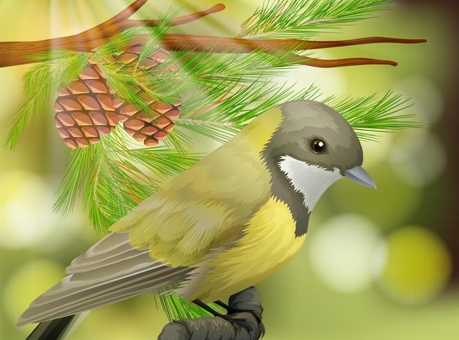 Un bellissimo uccello sul pino