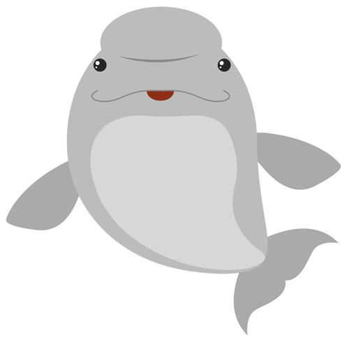 Balena del beluga su sfondo bianco