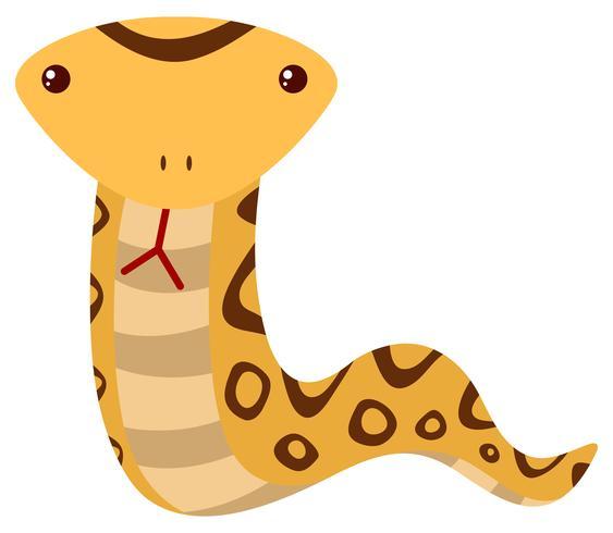 Serpiente de cascabel sobre fondo blanco