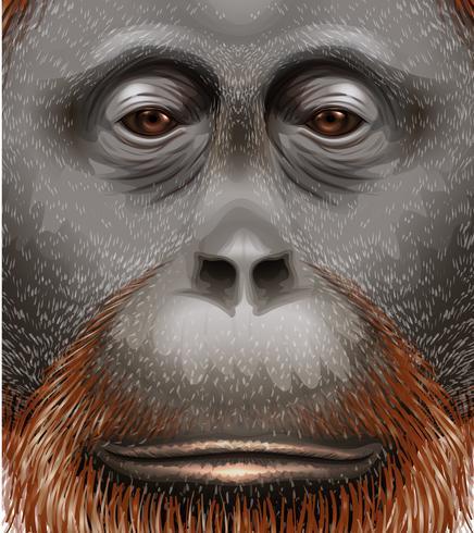 En orangutan