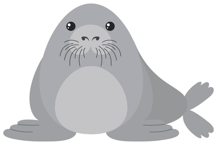 Cute seal on white background