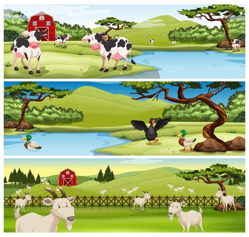 Animais da fazenda que vivem na fazenda