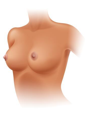 Anatomía del seno femenino sobre fondo blanco