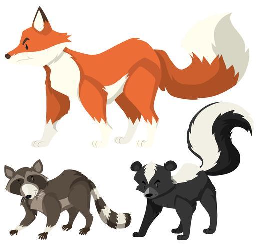 Três tipos de animais selvagens em branco