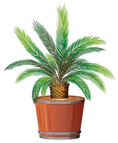 A Plant Growing in Pot