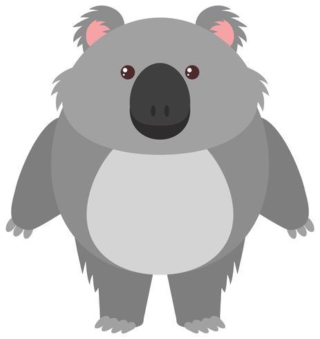 Koala lindo oso en el fondo blanco