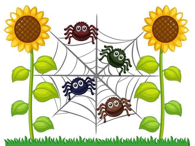 Araignées sur le web dans le jardin de tournesol