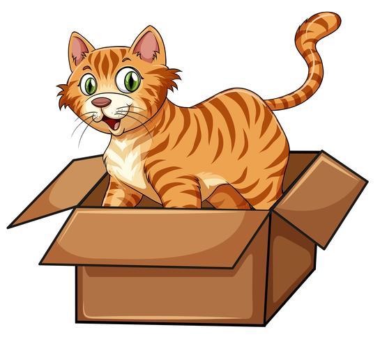 Um gato na caixa
