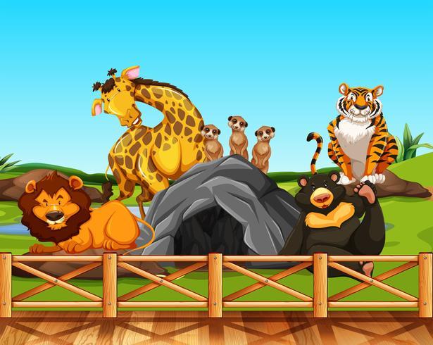 Verschillende dieren in een dierentuin vector