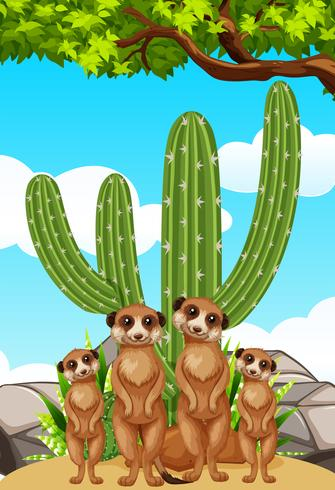 Meerkats standing by the cactus plant