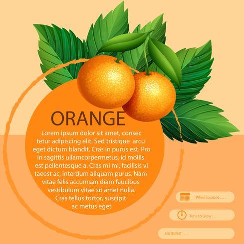 Infográfico design com laranjas frescas