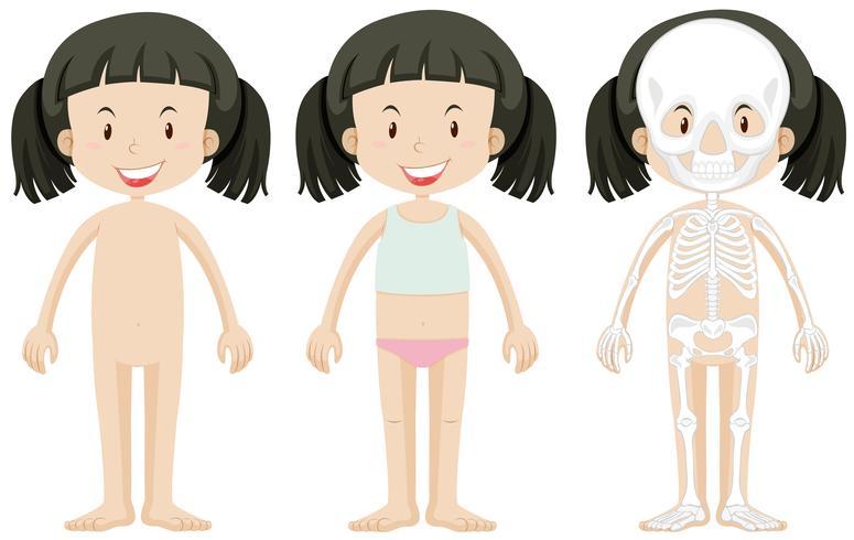 Parties de la fille et du corps