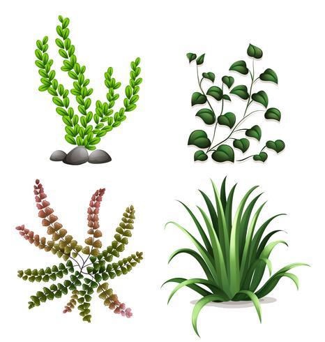 Um conjunto de plantas no fundo branco