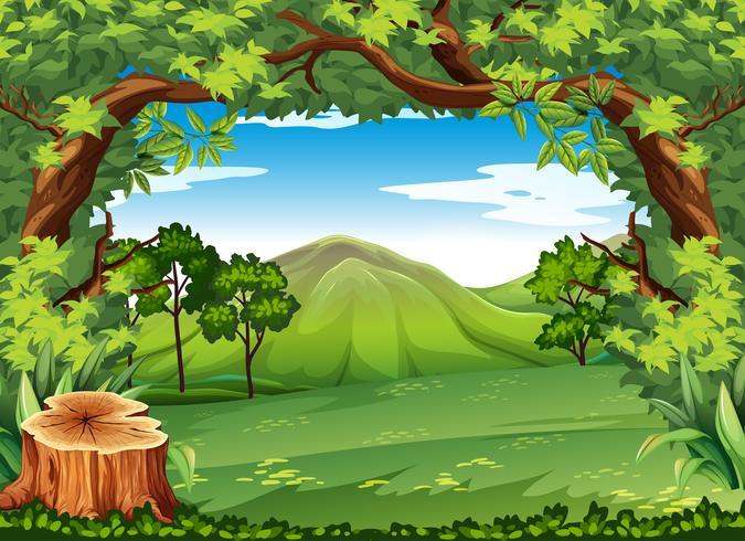 Escena de la montaña con árboles verdes