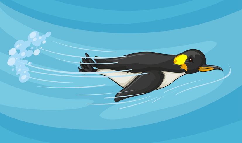 Pinguino che nuota sotto il mare