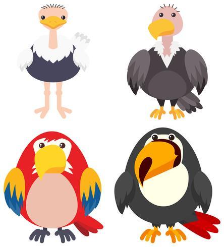 Quatre types d'oiseaux sur fond blanc