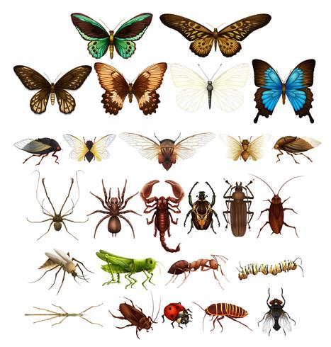 Wild insects in various types - Download Free Vector Art, Stock Graphics & Images
