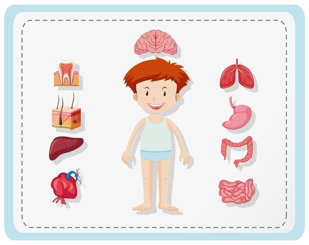 Chico y diferentes partes del cuerpo.
