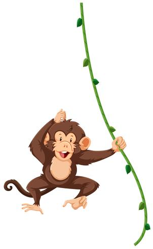 Un singe suspendu à la vigne