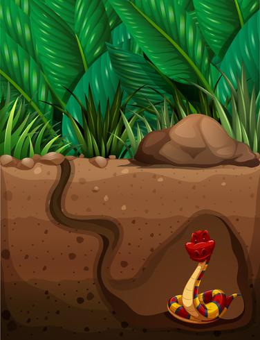Snake living under the ground