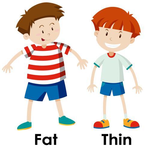 Diferenças entre gordura e coisa