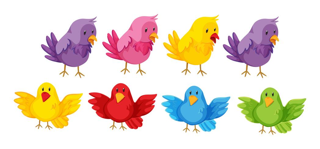 Conjunto de pássaros com penas coloridas
