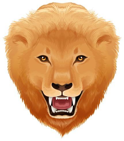 Fondo blanco de cabeza de leones