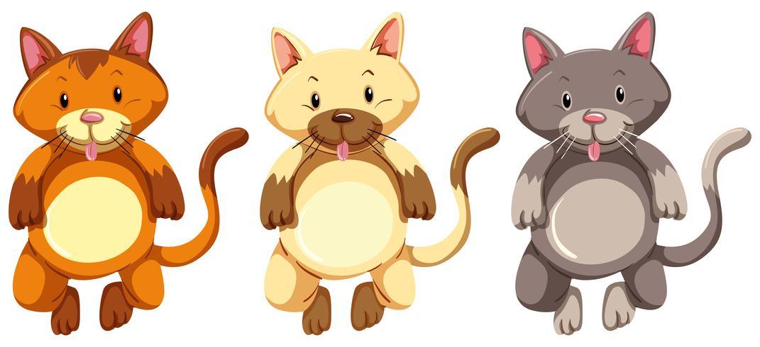 Drei kleine Kätzchen mit dummem Gesicht