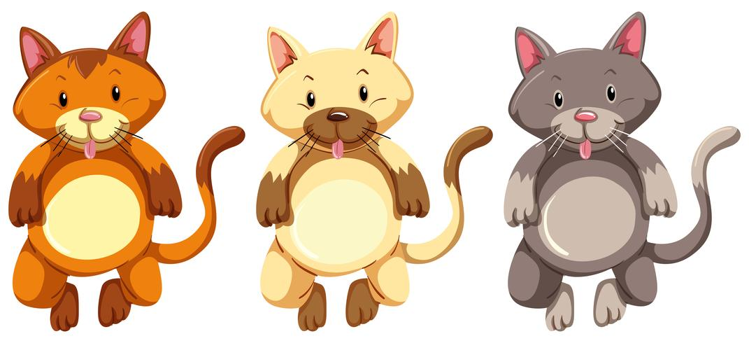Tre små kattungar med dumt ansikte