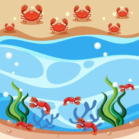 Scen av krabbor och räkor