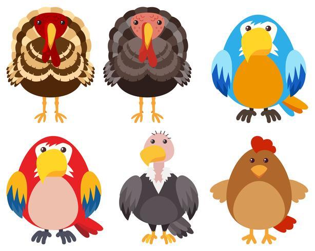 Pavos y diferentes tipos de aves. vector