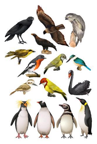 Olika slags fåglar