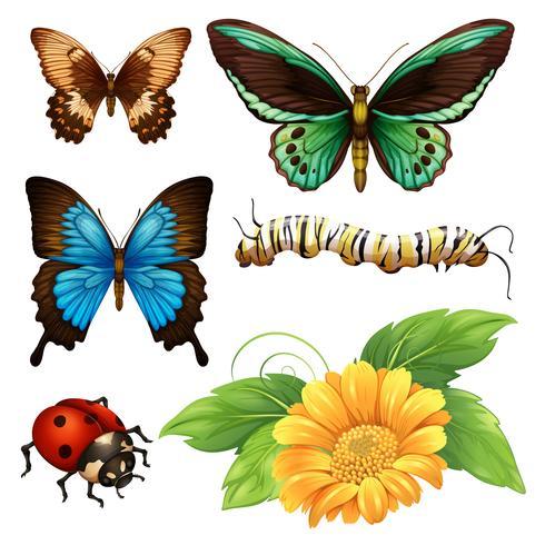 Tipo diferente de borboletas e insetos