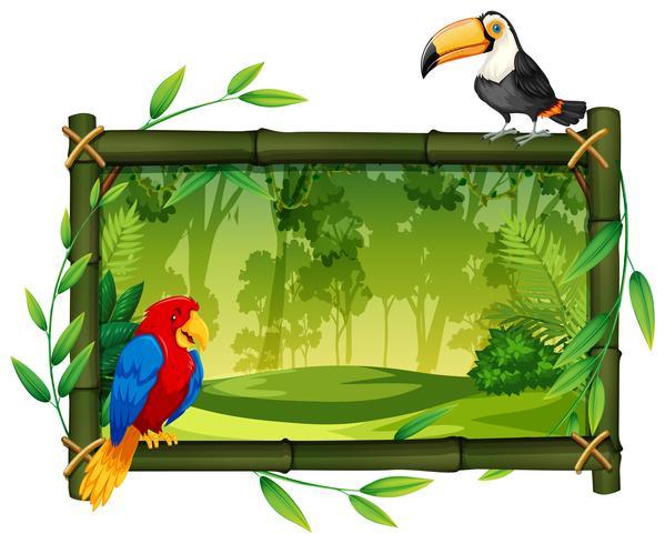 Pássaros na moldura da selva
