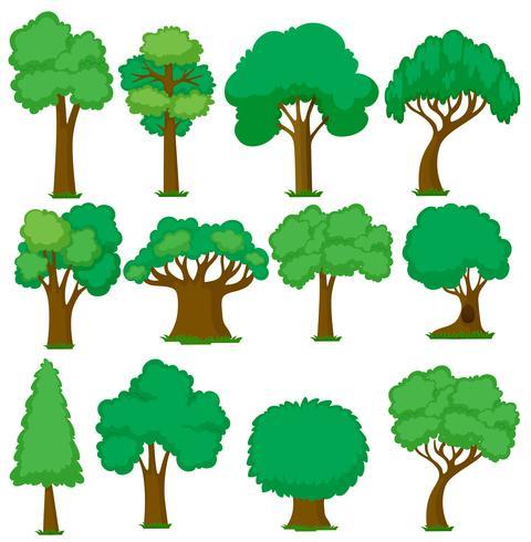 Insieme di vari alberi