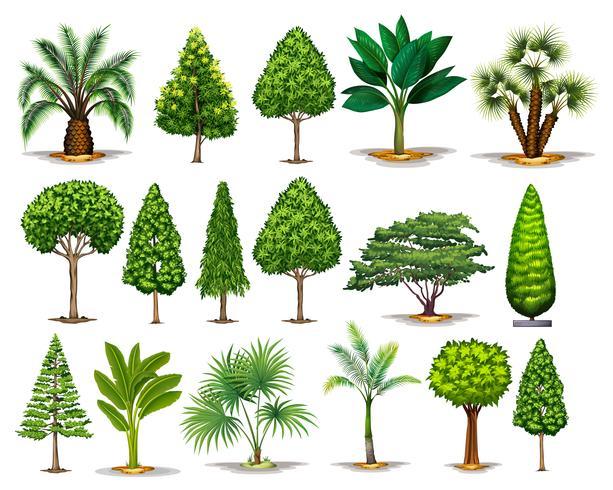 Verschillende soorten groene bomen